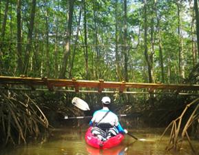 mangrove tour dominical