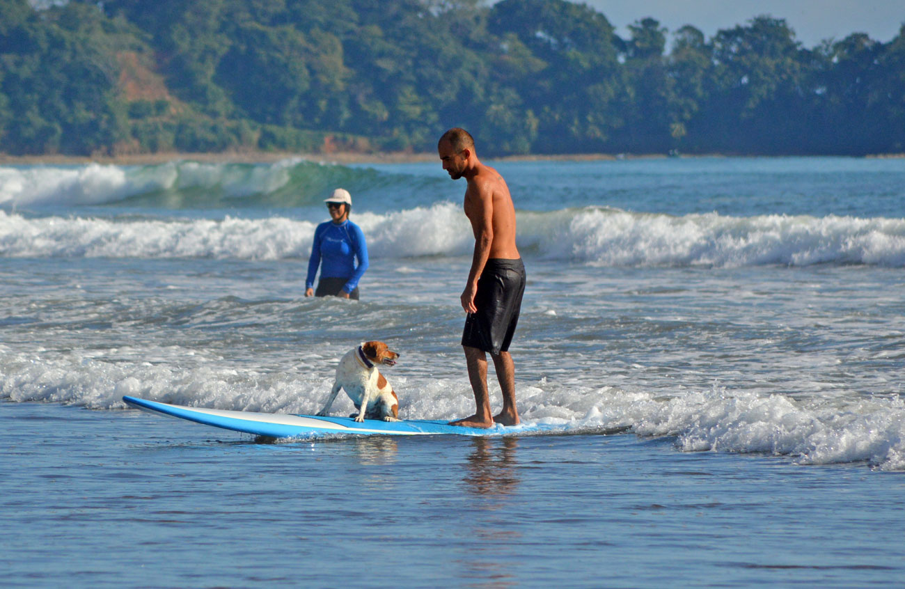 Surfing With A Dog In Dominical Costa Rica