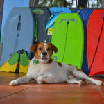 Costa Rica Surf Camp's Surf Dog