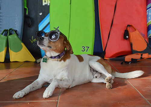 Surf Dog Dominical